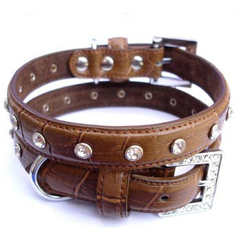 selecting leather dog collar